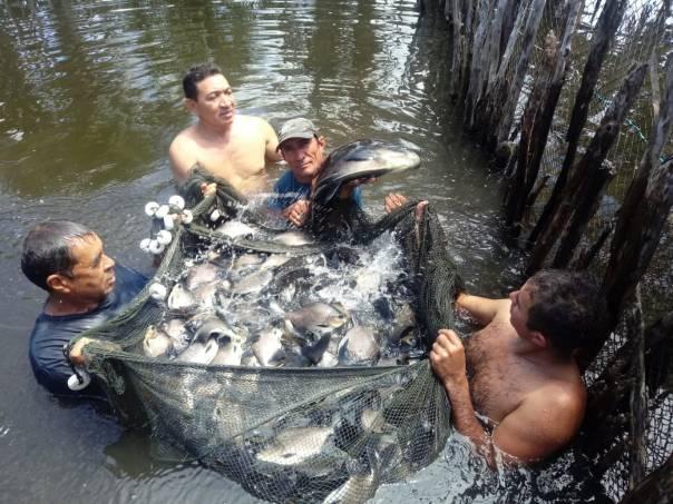 Criação de peixes no povoado Jabuti, município de Água Doce